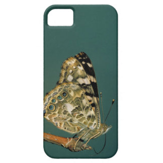 Painted Lady Butterfly Close-up iPhone SE/5/5s Case