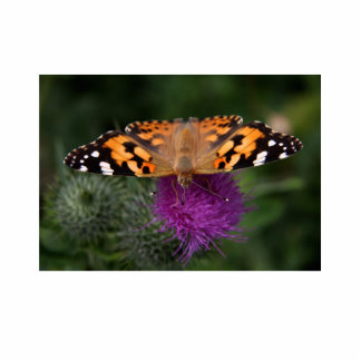 Painted lady butterfly cutout
