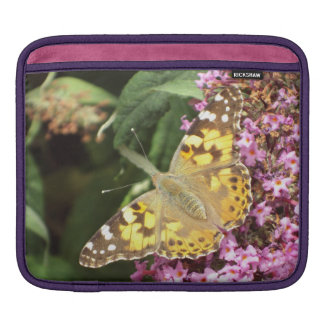 Painted Lady Butterfly, Feminine Sleeves For iPads