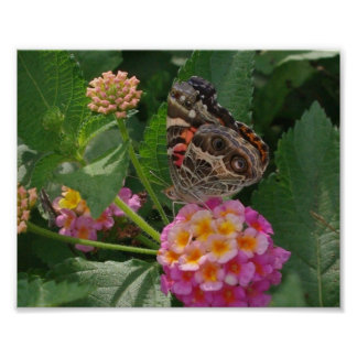 PAINTED LADY BUTTERFLY ON LANTANA FLOWERS POSTER