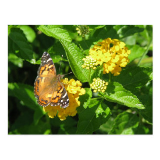 Painted Lady Butterfly on Lantana Postcard