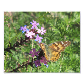 Painted Lady Butterfly on Purple Flowers Art Photo