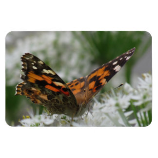 Painted Lady Butterfly Rectangular Photo Magnet
