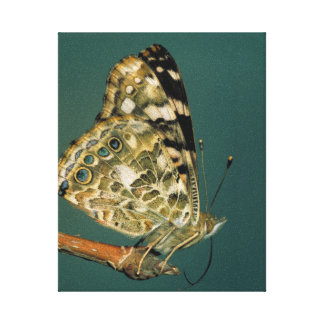 Painted Lady Butterfly Wings Canvas Print