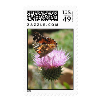 Painted Lady on California Thistle - Postage