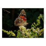 painted lady on the hedge cards