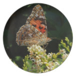 painted lady on the hedge dinner plate