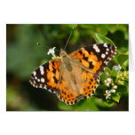 painted lady over the hedge greeting card