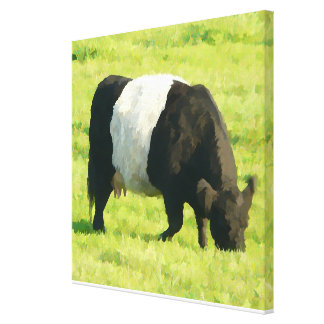 Painted Look Belted Galloway Cow in Field Canvas Print