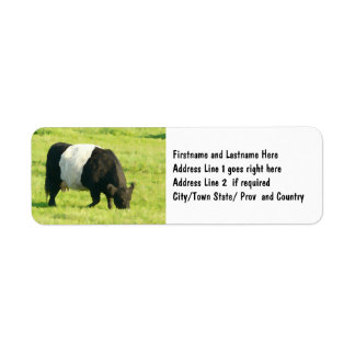 Painted Look Belted Galloway Cow in Field Label