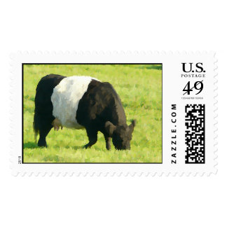 Painted Look Belted Galloway Cow in Field Postage