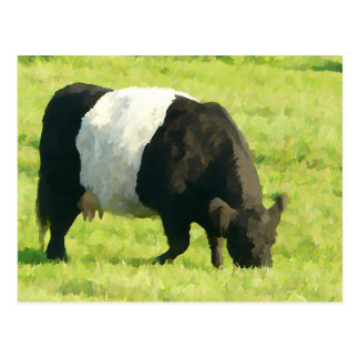 Painted Look Belted Galloway Cow in Field Postcard
