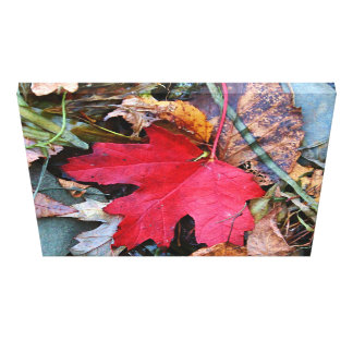 Painted Maple Leaf Gallery Wrap Canvas