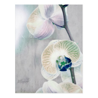 Painted Orchid Postcard
