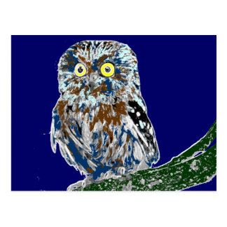 Painted owl postcard