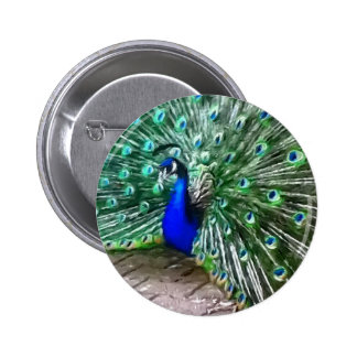 painted peacock 2 inch round button
