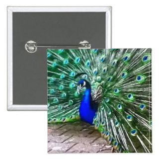painted peacock 2 inch square button