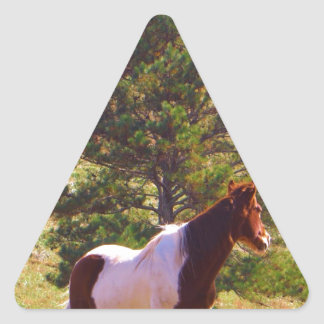 Painted Pony  by the Pine Triangle Sticker
