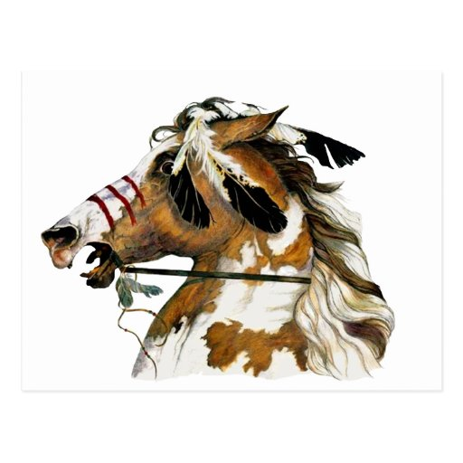 Painted Pony Postcard