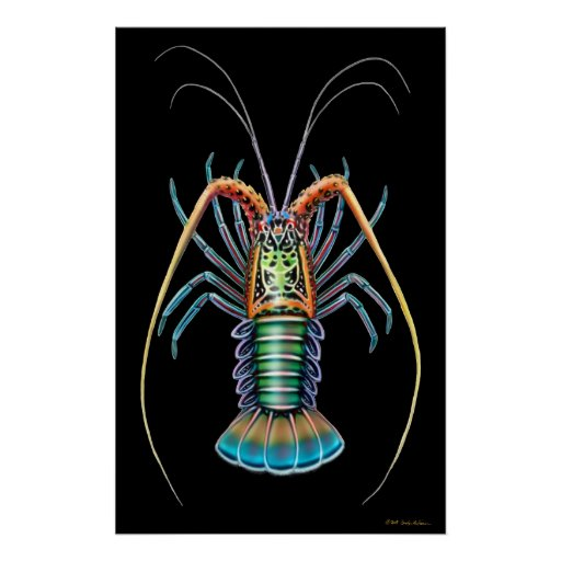 Painted Spiny Lobster Poster
