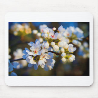 Painted Spring Blooming Bradford Pear Blossoms Mousepad