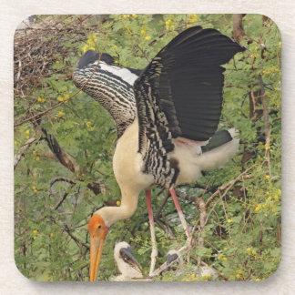 Painted Stork & youngones,Keoladeo National Drink Coaster