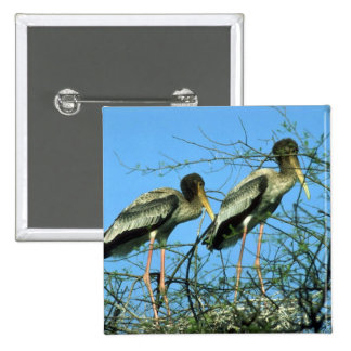 Painted Storks in nest 2 Inch Square Button