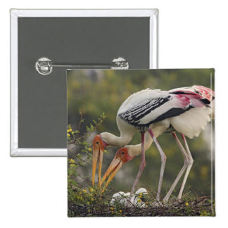 Painted Storks & youn one at nest,Keoladeo 2 Inch Square Button