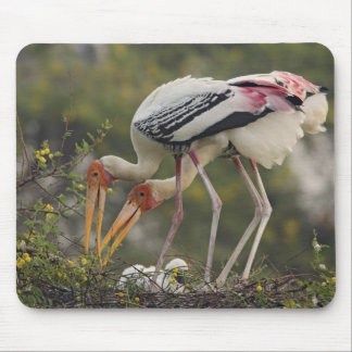 Painted Storks & youn one at nest,Keoladeo Mouse Pad
