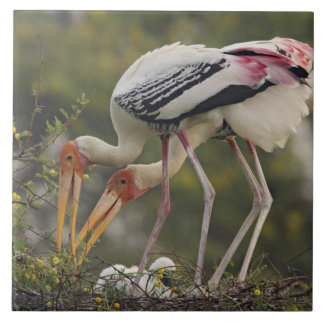 Painted Storks & youn one at nest,Keoladeo Tile