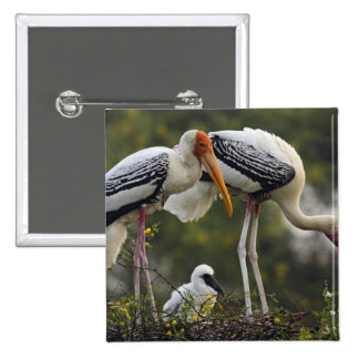 Painted Storks & young one at nest,Keoladeo 2 Inch Square Button