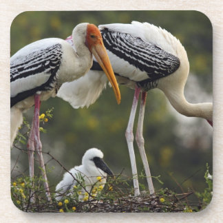Painted Storks & young one at nest,Keoladeo Coaster