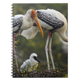 Painted Storks & young one at nest,Keoladeo Notebooks