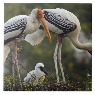 Painted Storks & young one at nest,Keoladeo Ceramic Tiles