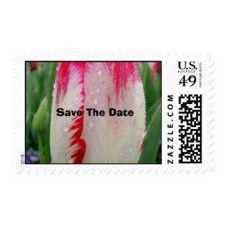 Painted Tulip Postage