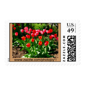 Painted Tulips Postage Stamp