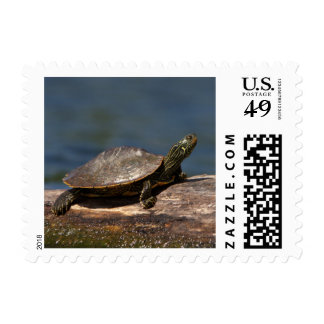 Painted Turtle on a branch Postage Stamp