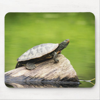 Painted Turtle on a log Mouse Pad