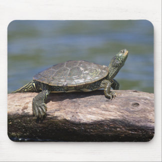 Painted Turtle on a sunny day Mouse Pad