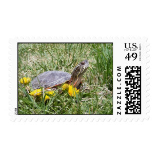 Painted Turtle Postage Stamps