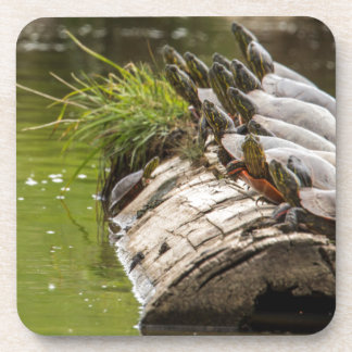Painted Turtles Sunning Themselves In A Pond Coaster