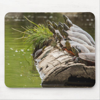 Painted Turtles Sunning Themselves In A Pond Mouse Pad