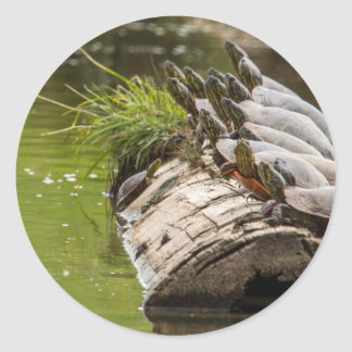 Painted Turtles Sunning Themselves In A Pond Round Sticker
