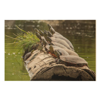 Painted Turtles Sunning Themselves In A Pond Wood Wall Decor