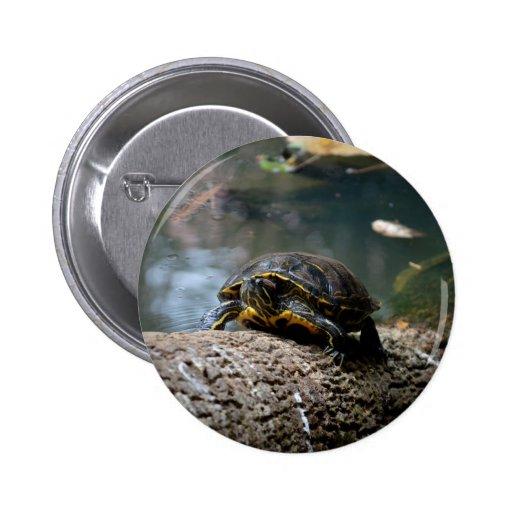 painted water turtle climbing log pin