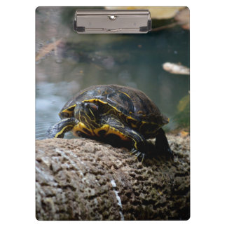 painted water turtle climbing log clipboard