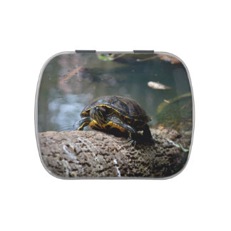 painted water turtle climbing log jelly belly tins