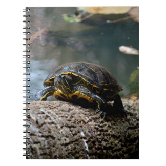 painted water turtle climbing log notebook