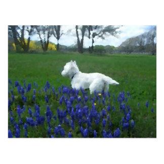 Painted Westie Spring Flowers Postcard
