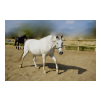 PAINTED WHITE HORSE POSTER